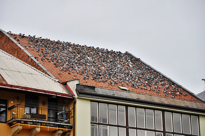 A2B Pest Control are able to install spikes to deter birds from roofs in Mitcham.