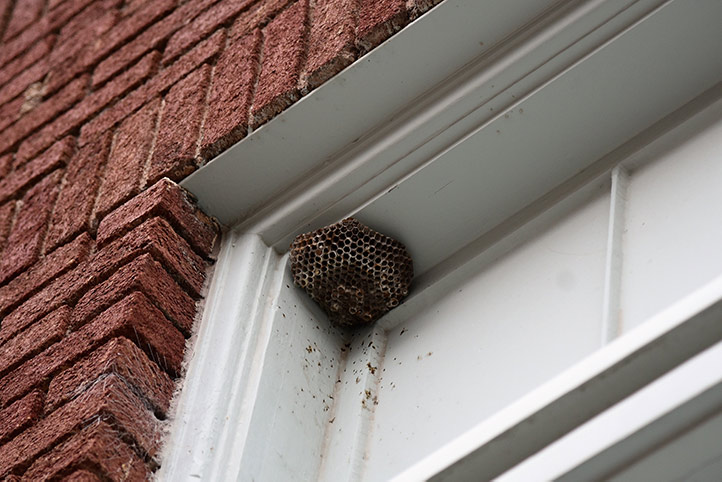 We provide a wasp nest removal service for domestic and commercial properties in Mitcham.